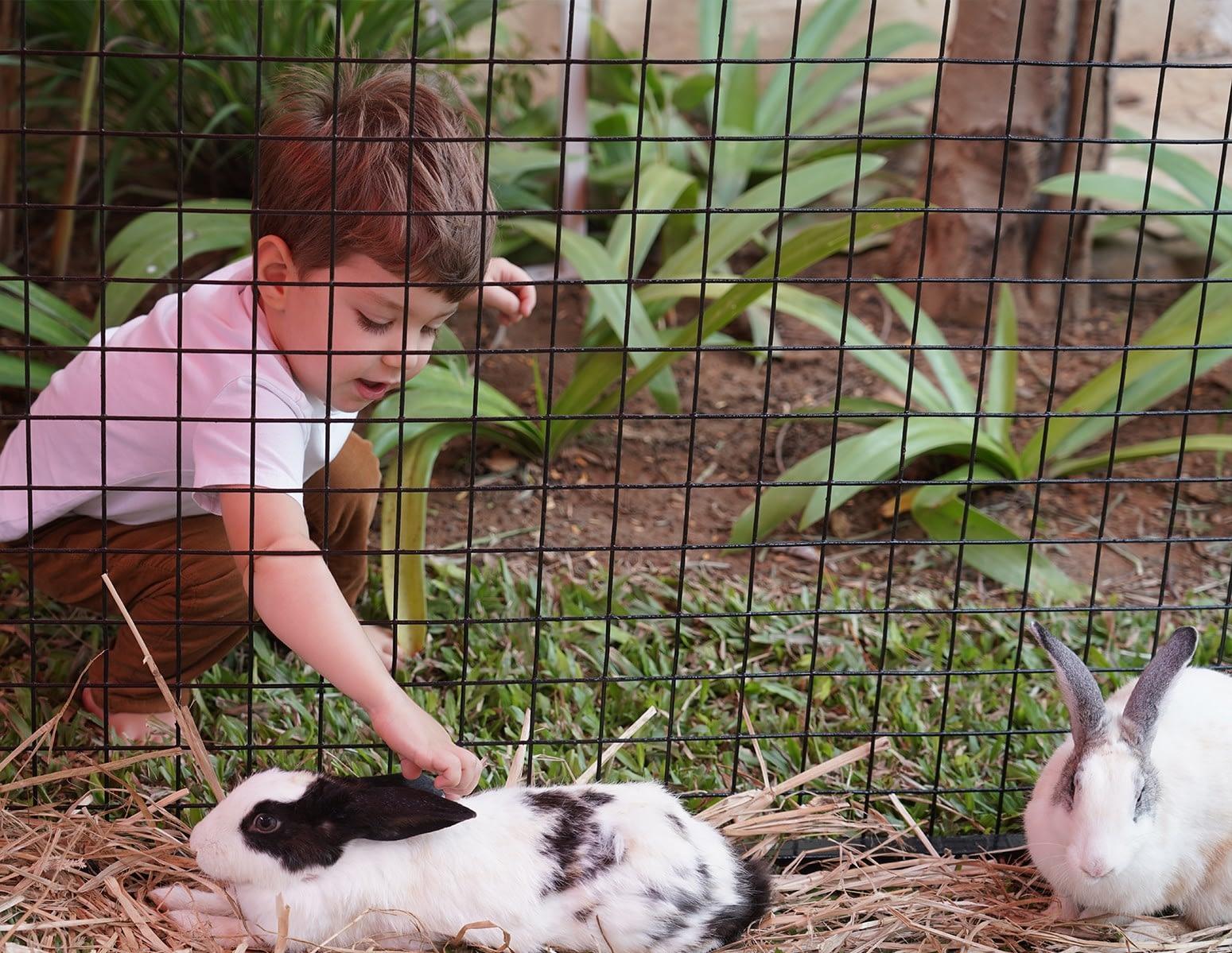 Benefits of Animals around Children